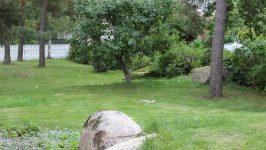 Viherrakennus, nurmikot ja tukimuurit